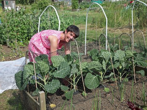 At Glenthorne Allotments, Ellen works on her and Andrew's plot, netting brassicas. Photo: philip_talmage on Flickr CC BY-NC-ND 2.0