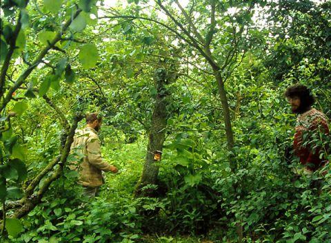 Dense green undergrowth in a forest garden