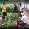 Volunteers at Horton Community Farm in a polytunnel